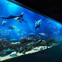 Read more about S.E.A. Aquarium 23% OFF Three Adult Tickets Online Promo 12 Feb - 31 Mar 2014