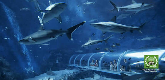 S.E.A. SEA Aquarium