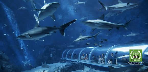 S.E.A. SEA Aquarium