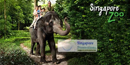 Featured image for LIMITED OFFER: Singapore Zoo 30% Off Adult & Children Tickets 29 Aug 2011
