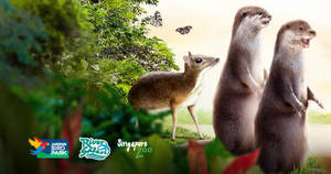 Featured image for WRS: Buy a Singapore Zoo ticket and save 53% off Jurong Bird Park or River Safari! From 1 – 31 Aug 2018