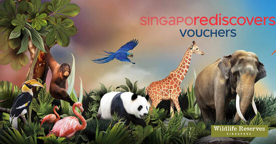 Featured image for Enjoy 50% OFF Singapore Zoo & River Safari Adventure Combo for visits till 27 Dec 2020 (excludes 25 Dec)